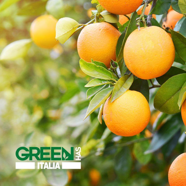 Green Has Italia