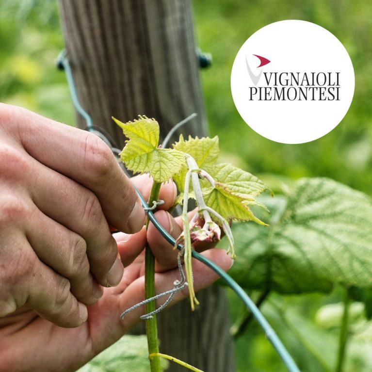 Vignaioli Piemontesi